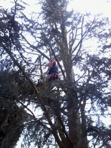 page-entretien-des-arbres