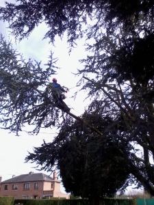 page-entretien-des-arbres-3