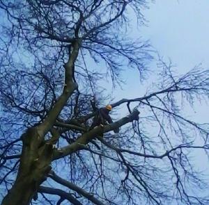 entretien des arbres