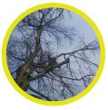 photo-entretien-des-arbres